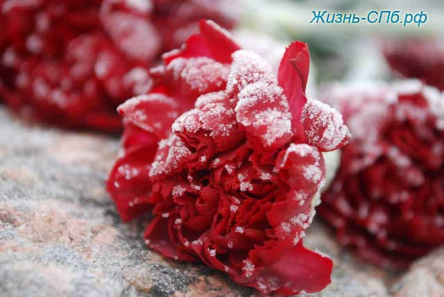 Цветы у памятника Академику Сахарову