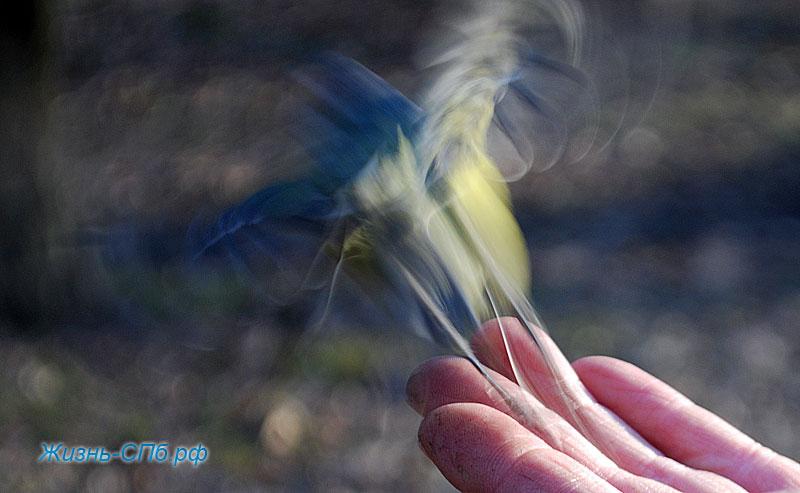 кормление птиц в Петрбурге