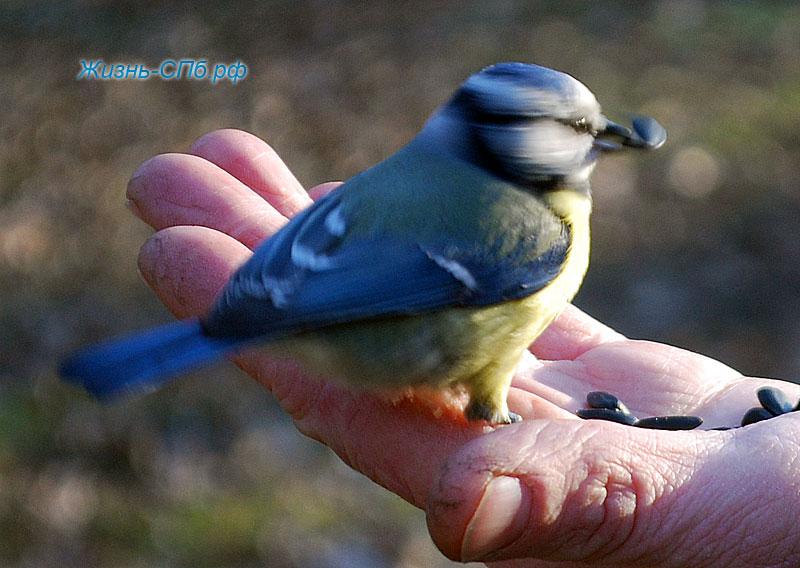 Птицы в парке Петербурга