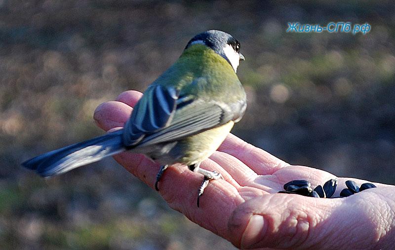 Птицы на Елагином острове