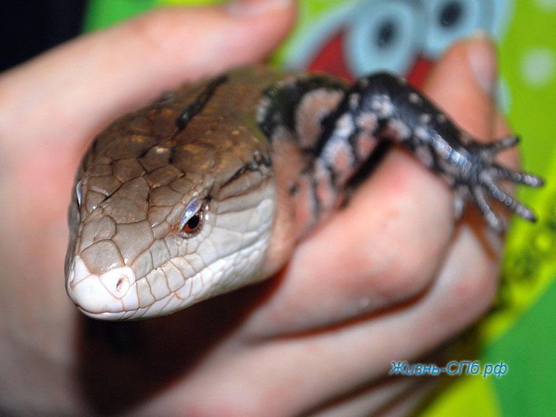 Рептилии на выставке Зоошоу Петербург