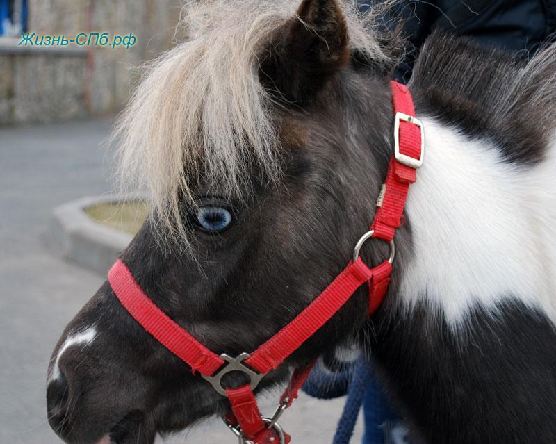Покататься на пони в Лекэкспо