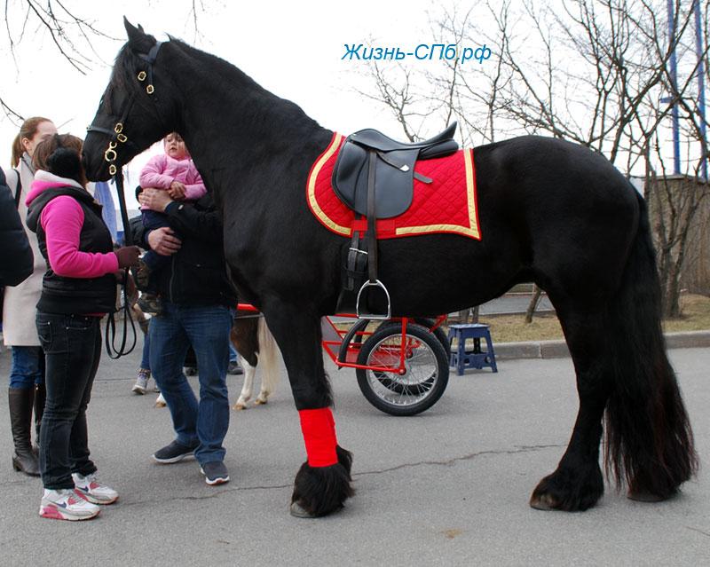 Покататься на лошади в Лекэкспо