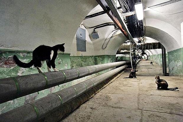 Коты в подвалах Эрмитажа