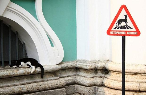 Знак на парковке «Осторожно кошки!»