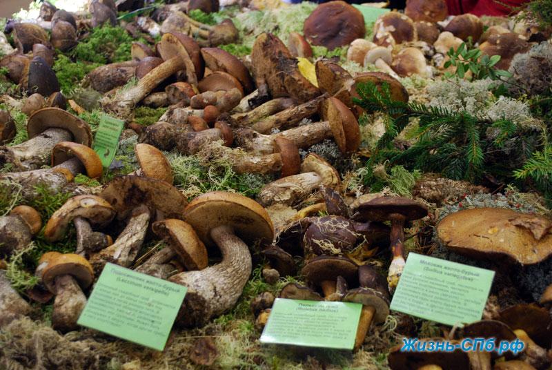 Съедобные грибы