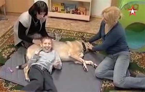Собака терапевт с ребенком