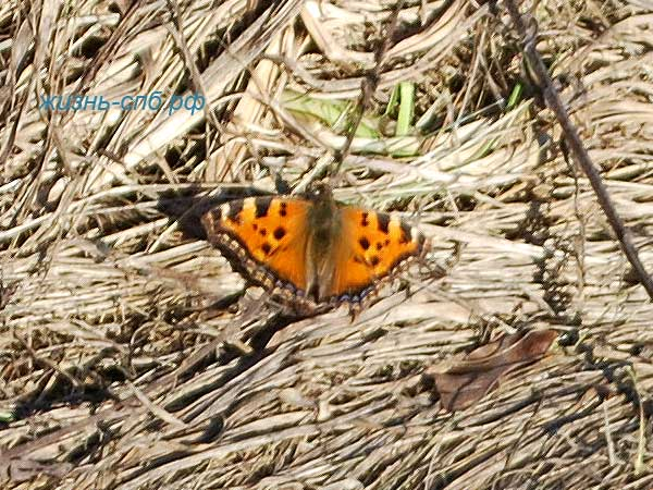 Бабочка в марте