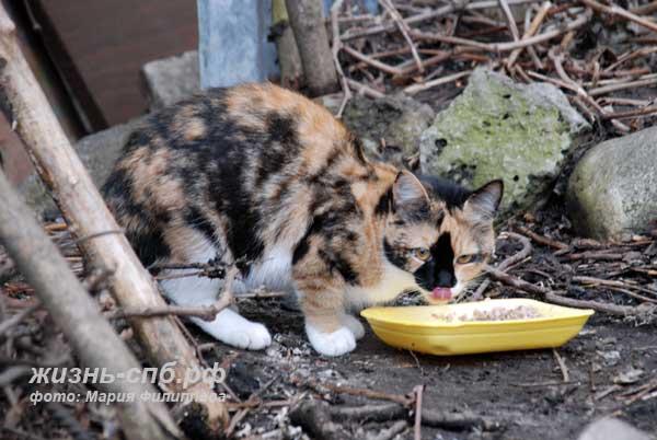 Уличные коты Петербурга