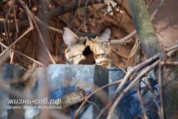 Дворовые коты Питера