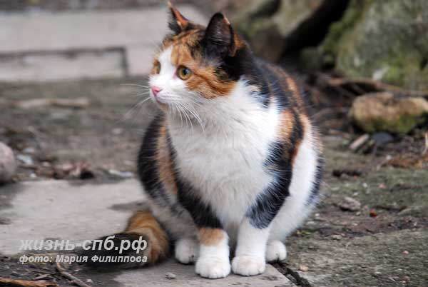 кошки дворовые фото