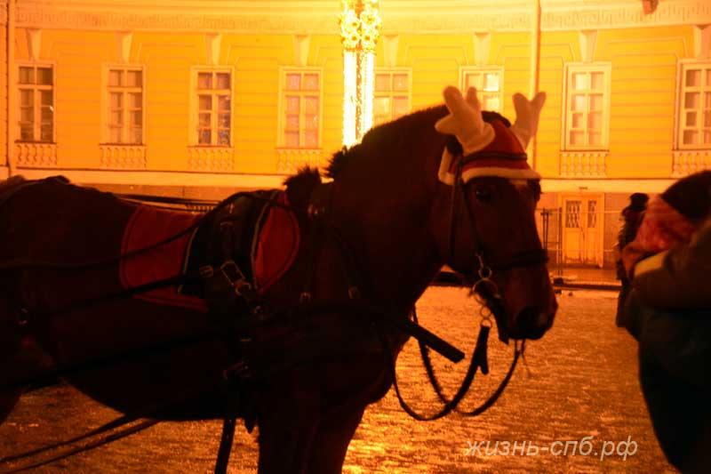 Новогоднее катание на лошадях на Дворцовой площади