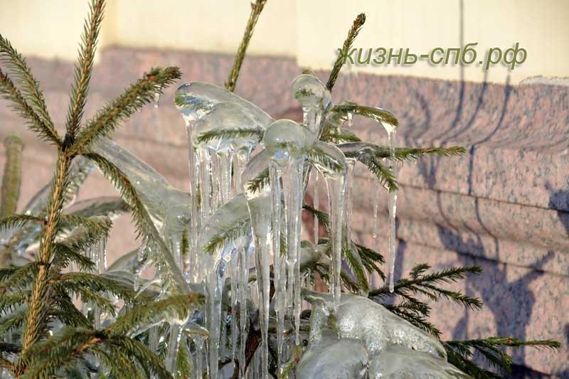 Елочки во льду