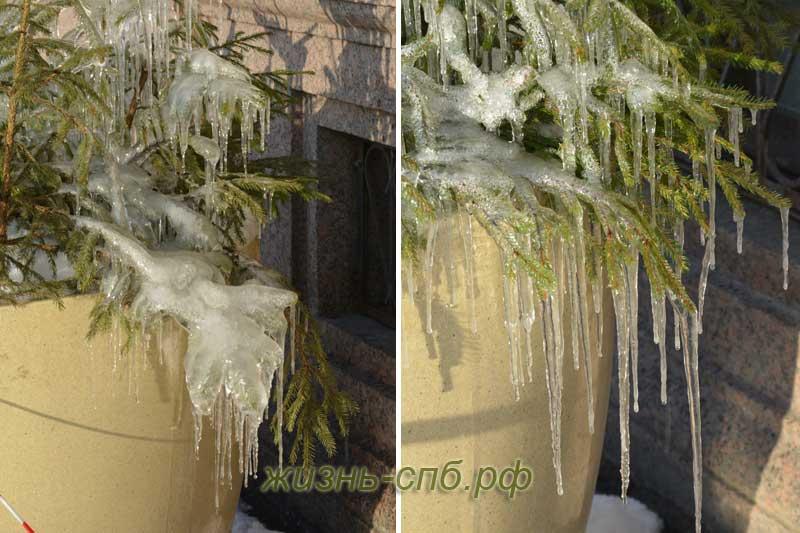 Зимние елки