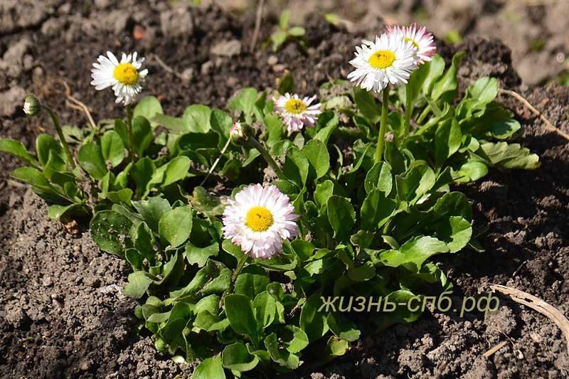 Цветы в Питерских дворах