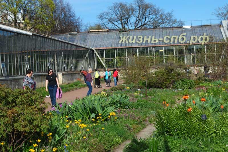 Весенние цветы мая в Петербурге