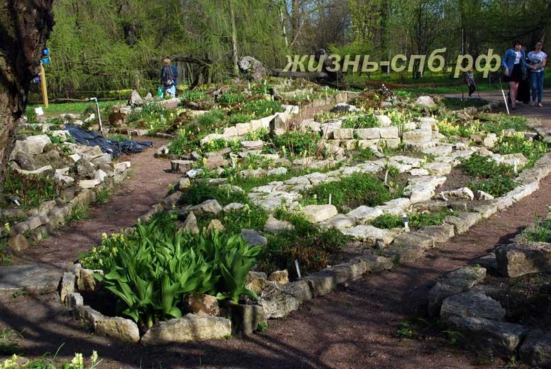 Альпийская горка или сад камней в ботаническом саду Петербурга