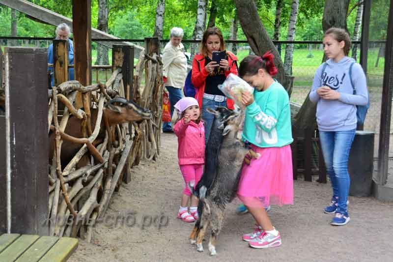 Кормление козлят в зоопарке имени Чебурашки на Кретсовском острове