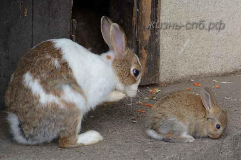 Кролики - мама с малышом в вольере зоопарка около ресторана Карл и Фридрих
