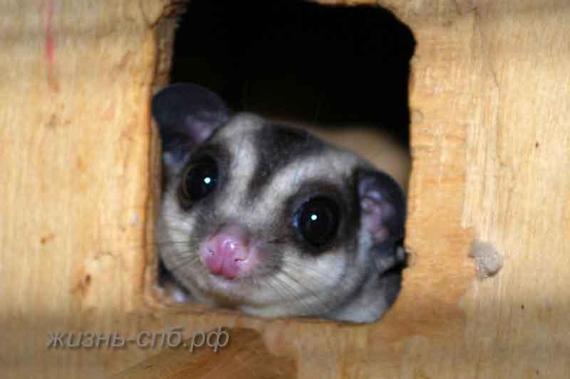 милое животное в закрытом зоопарке Эколого-биологического центра