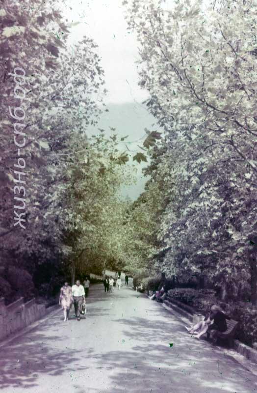 Ливадия. Аллея парка. Архивные фотографии