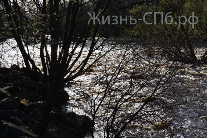 Водосливной канал весной 19-го года