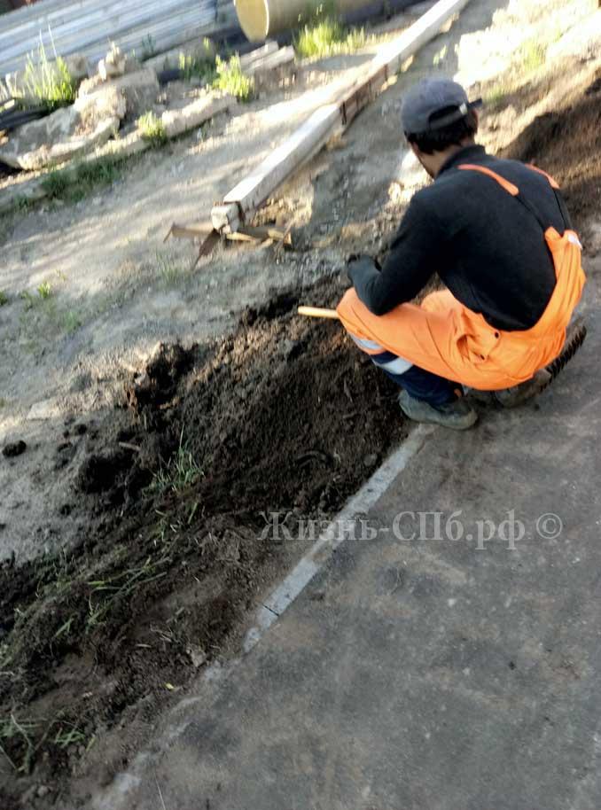 Озелениние тротуара Токсово