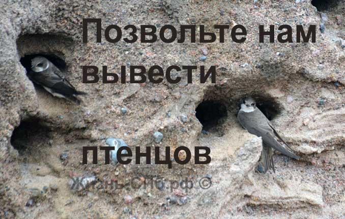 Птицы Петербурга - стрижы на Васильевском острове
